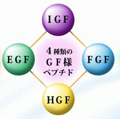 4つのGF様ペプチド