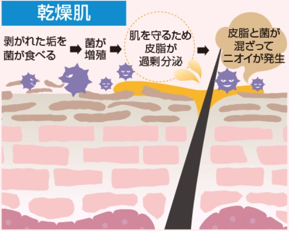 乾燥肌は皮脂が過剰分泌され臭いを作り出す